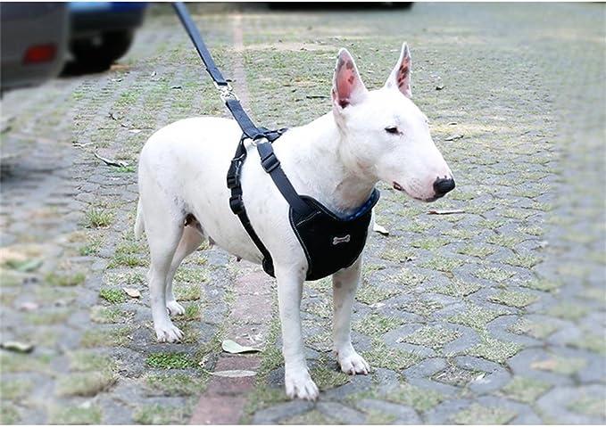 Petneces - Arnés de Seguridad para Perro con Cinturones de ...