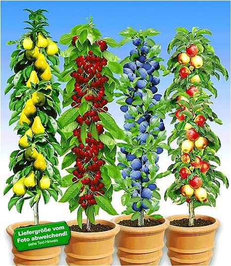 Gemeinsame BALDUR-Garten Säulen-Obst-Kollektion Birne, Kirsche, Pflaume #KI_19