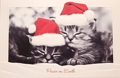 Boxed Cat Christmas Cards.Amazon Com Sweet Slumber Boxed Embossed Cat Christmas Cards By