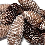 BANBERRY DESIGNS Sugar Pine Cones - Set of 14 Large Pine Cones with a White-Washed Finish - Fall and Winter Decor