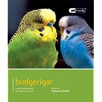 Budgerigar: Pet Friendly - Budgerigar