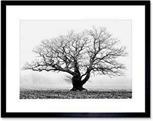 Old Oak Tree Black White Mist Fog Photo Framed Art Print Picture & Mount F12X634