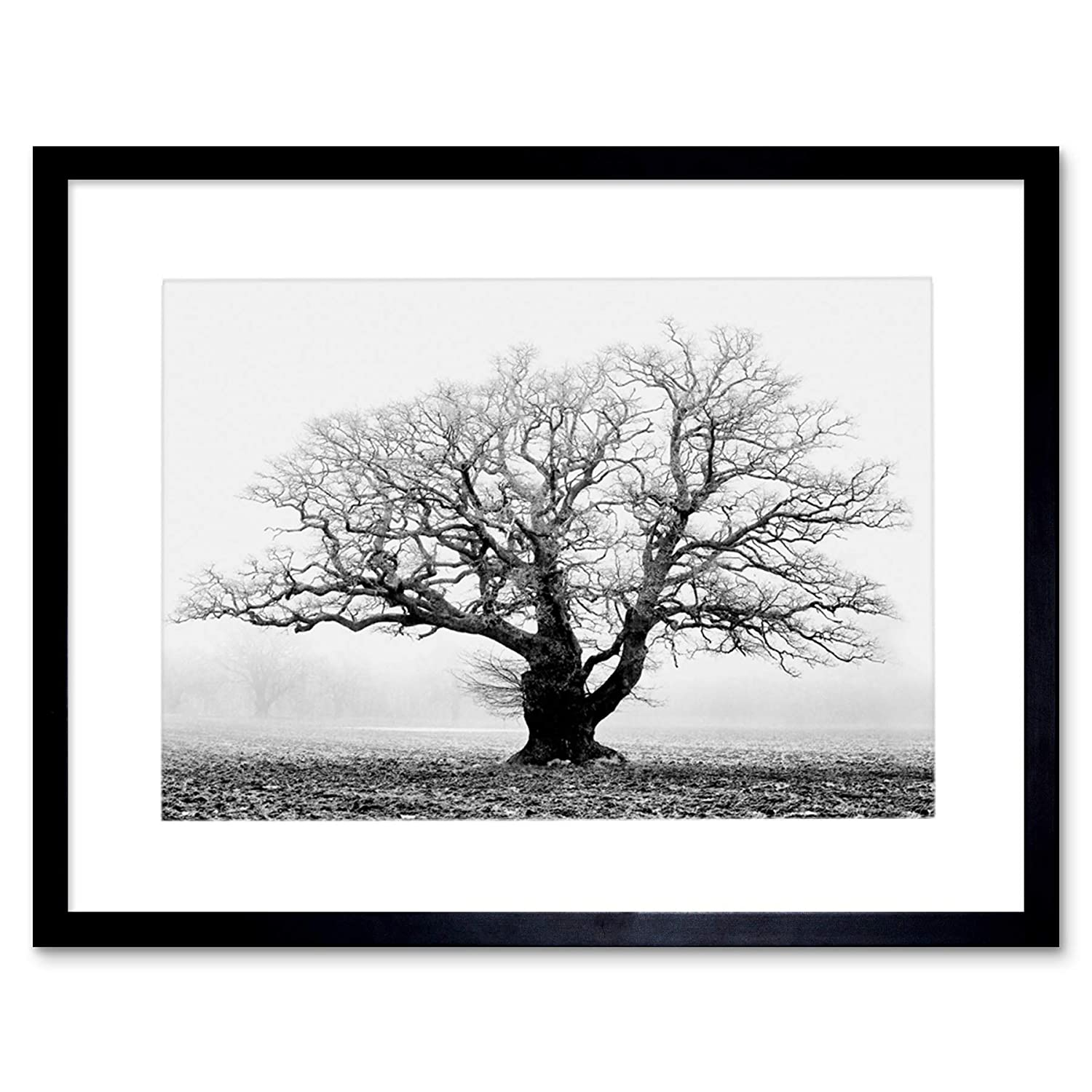 Amazon com old oak tree black white mist fog photo framed art print picture mount f12x634 posters prints