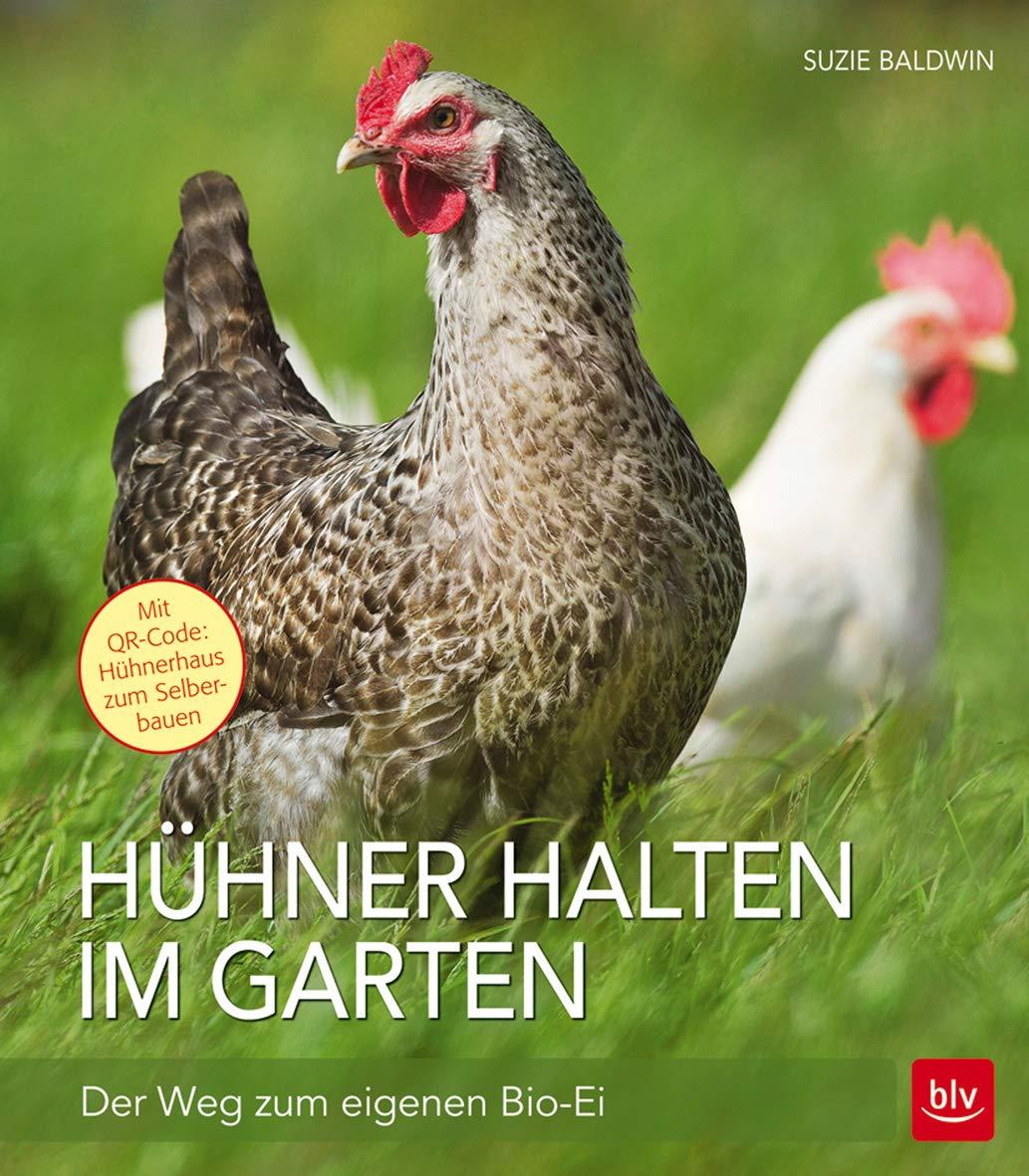 Hühner Halten Im Garten  Der Weg Zum Eigenen Bio Ei