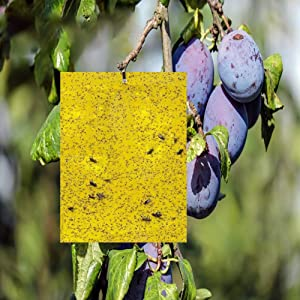 Dual-Sided Yellow Sticky Traps for Flying Plant 6x8 Inches with Twist Ties Pack of 20