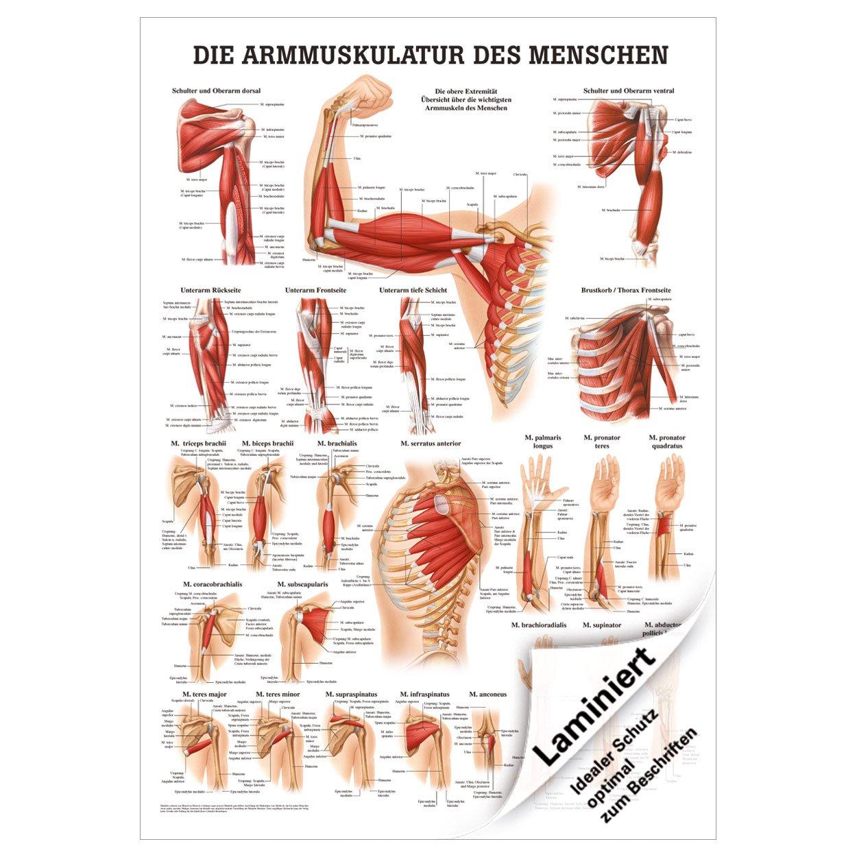 Großzügig Menschliche Anatomie Poster Galerie - Physiologie Von ...