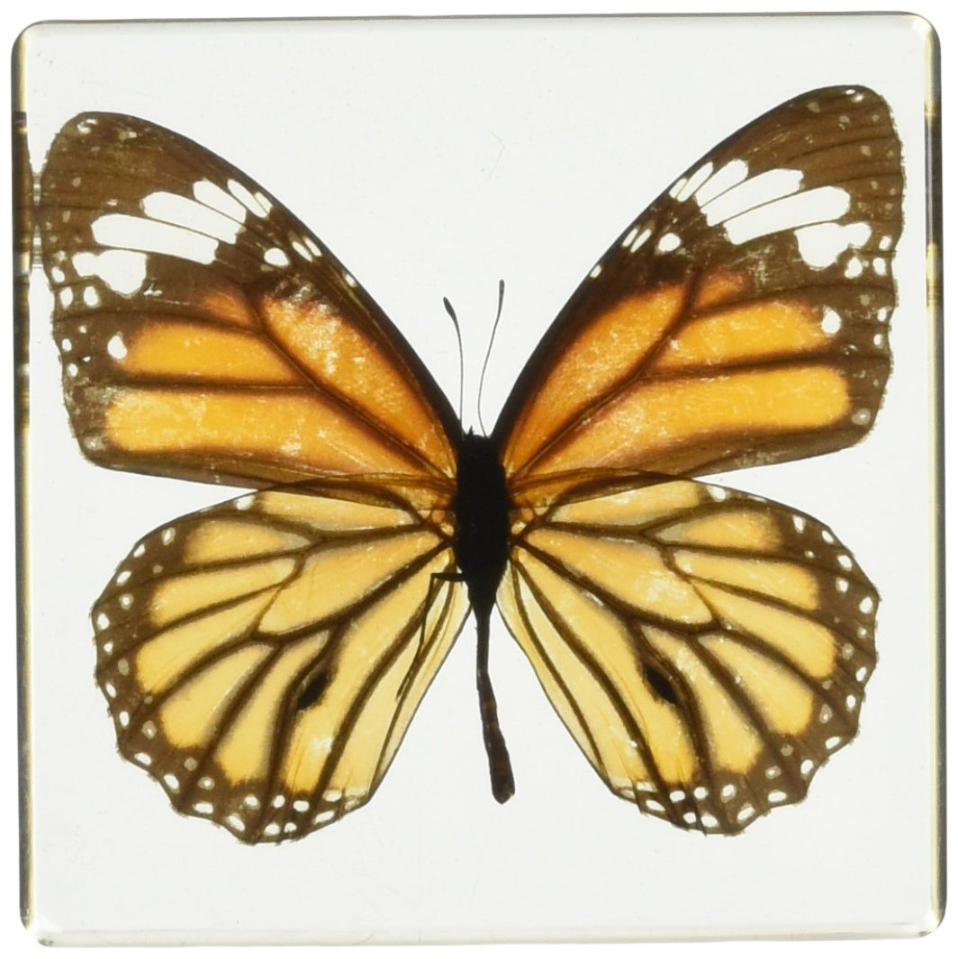 REALBUG Monarch Butterfly Paperweight(3x3x1)