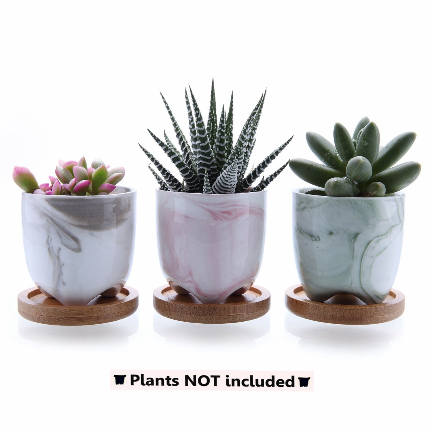 T4U 2.25'' Ice Cream Serial Modern Sucuulent Cactus Plant Pots Flower Pots Planters Containers Window Boxes Full Colors with Bamboo Trays by T4U