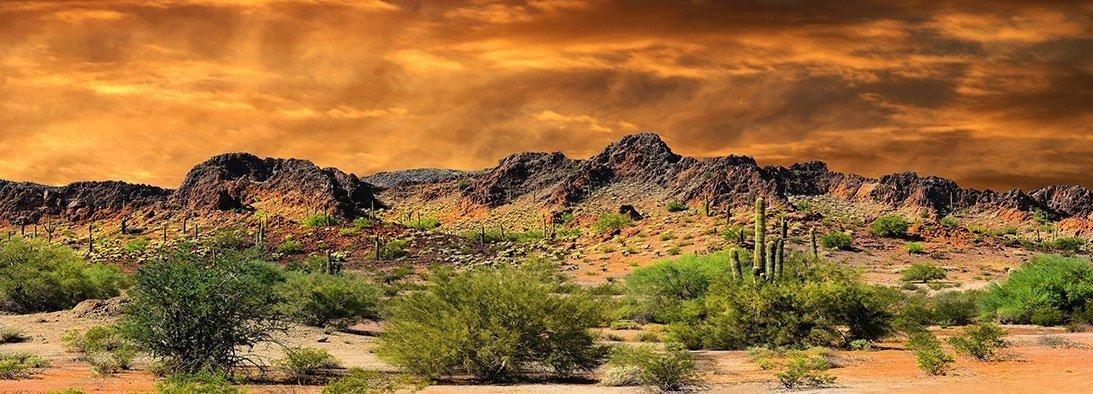 Reptile Habitat, Terrarium Background, Orange Desert Sky with Cactus - (Various Sizes) (18x72) BNS