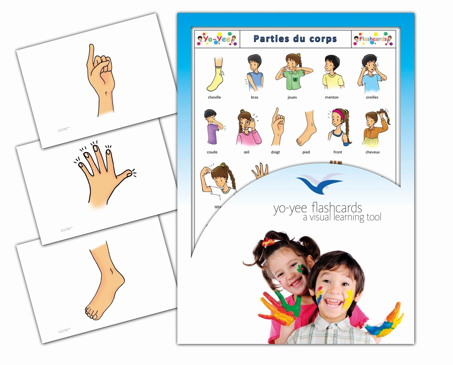 Parties du corps - Fiches de vocabulaire - Body Parts Flashcards in French Yo-Yee Flashcards