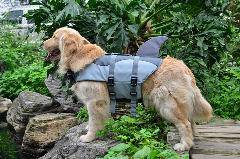 Amazon.com : Be Good Life Jacket Dog or Cat Floatation Vest Fish Style Lifesaver Adjustable Ripstop Life Jacket Pet Life Preserver for Water Safety at the ...