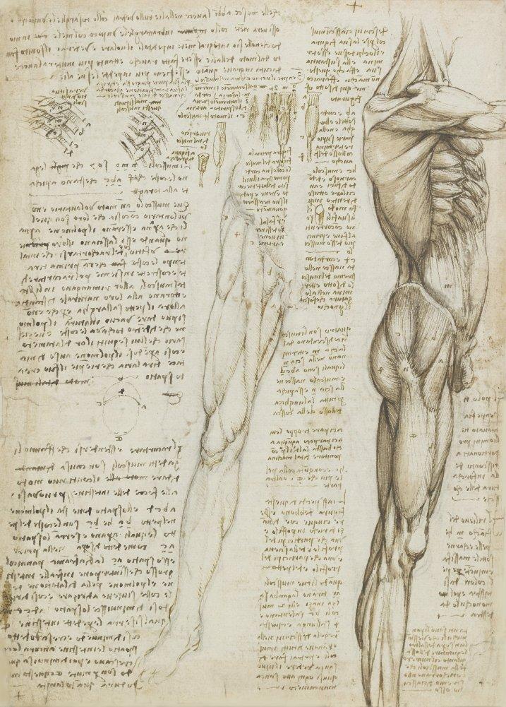 Anatomía LEONARDO da VINCI \