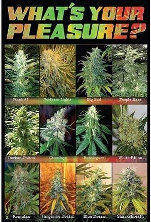 Amazon.com: Buyartforless What's Your Pleasure Cannabis Marijuana Chart  36x24 Art Print Wall Decor: Posters & Prints
