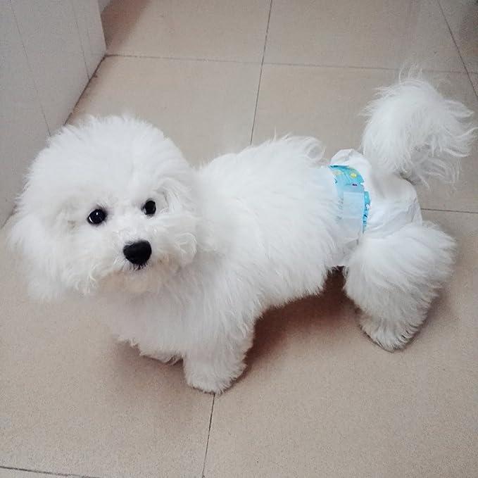 10X de algodón para mascotas pañal del perro del gato - S: Amazon.es: Hogar