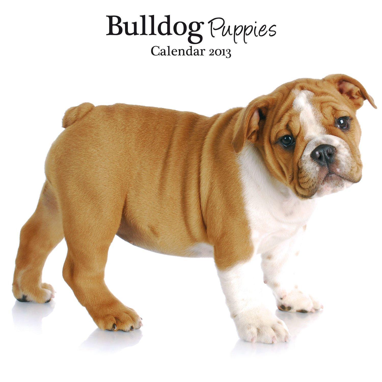 Magnet & Steel Bulldog Puppies Mini Wall Calendar