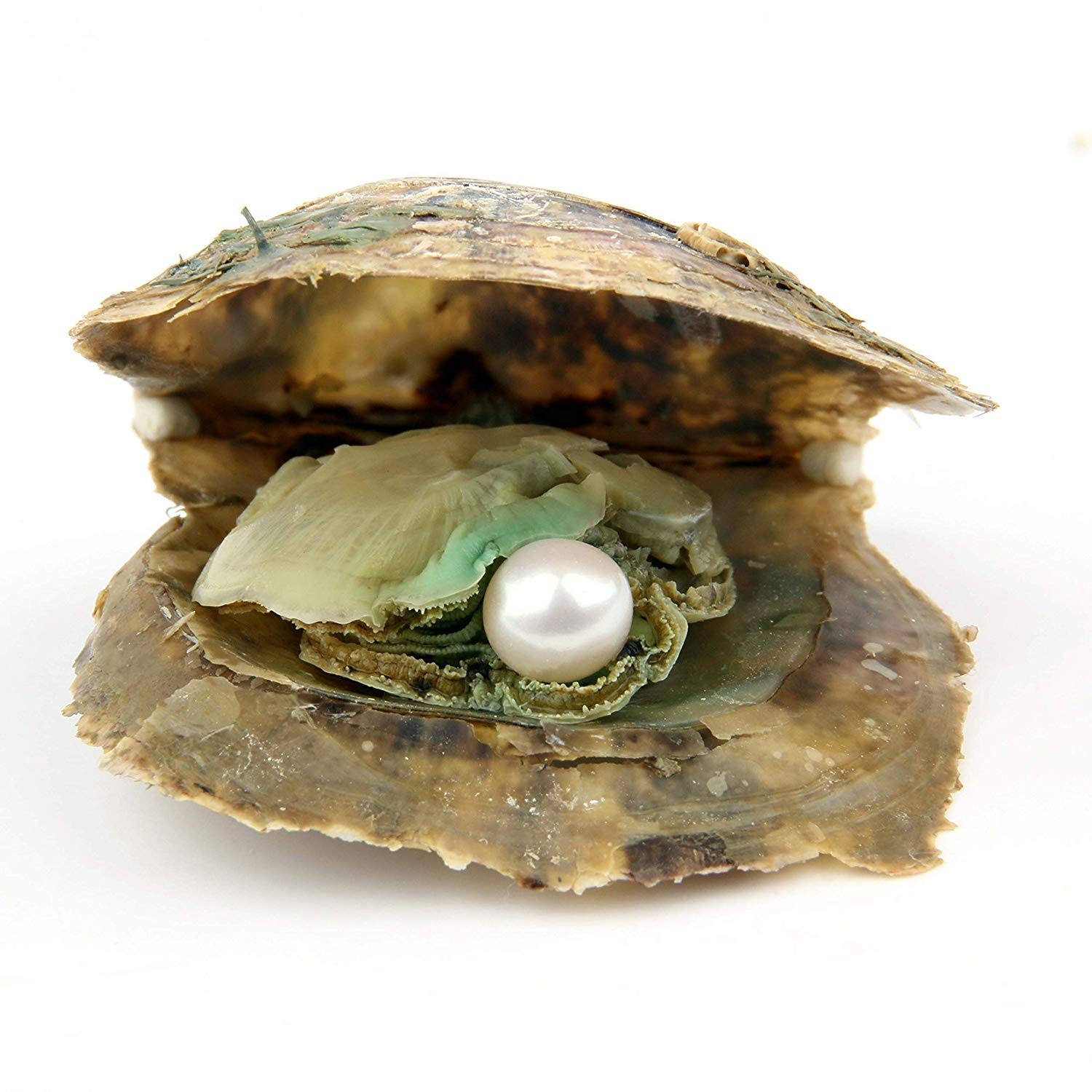 POSHOPS 50PC Akoya Oysters with Pearls Inside Wholesale Round Pearl Saltwater Akoya Oysters Bulk for Christmas Party by POSHOPS (Image #5)