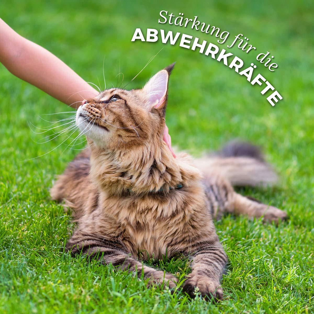 Pastillas AntiGarrapatas para Gatos (60 cápsulas) | Producto ...