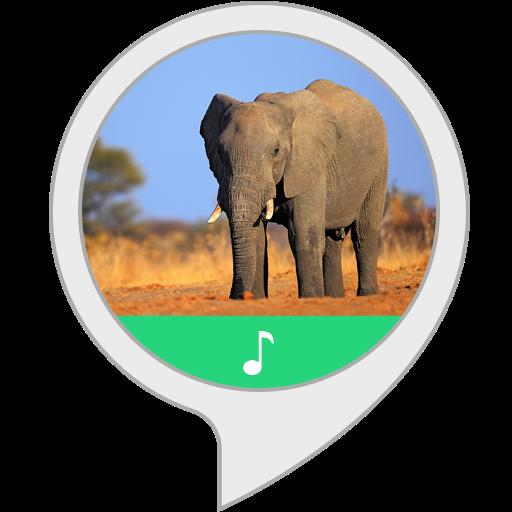 Elefantentrompete