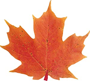 """Paper House Productions 2.85"""" x 2.5"""" Die-Cut Autumn Maple Leaf Shaped Magnet for Refrigerators and Lockers"""