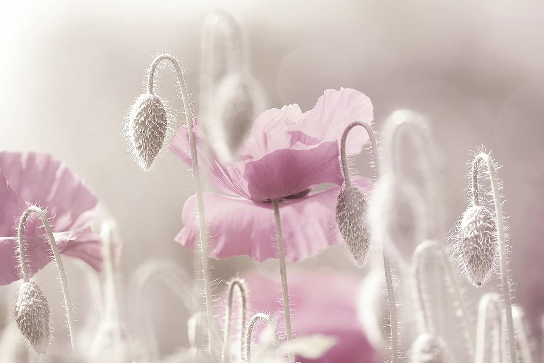 Artland Qualitätsbilder I Bild auf Leinwand Leinwandbilder Wandbilder 120 x 80 cm Botanik Blumen Mohnblume Foto Pink Rosa C1XN Rosa Mohnblumen Zeit