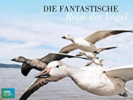 Die fantastische Reise der Vögel