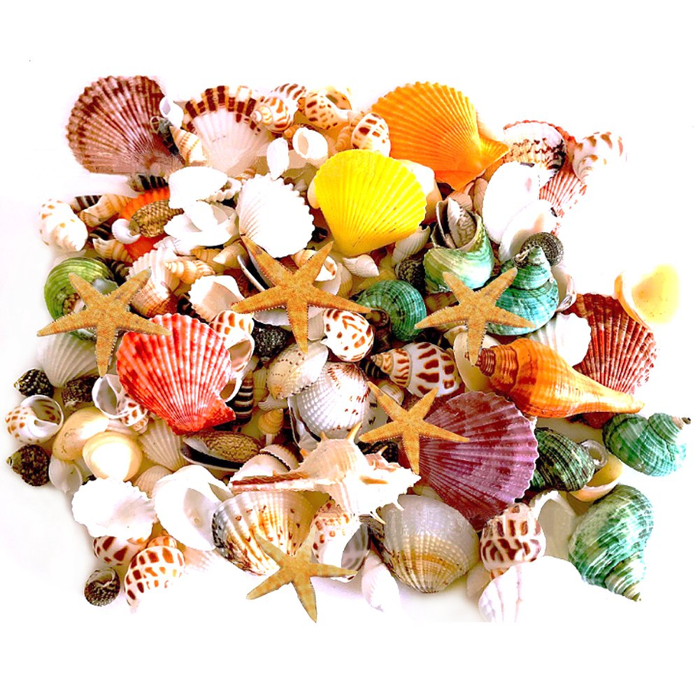 135 PCS Mini Sea Shells Mixed Beach Seashells Starfish, Colorful Natural Seashells Perfect Accents for Candle Making,Home Decorations, Beach Theme Party Wedding Décor, Fish Tank and Vase Fillers Miraclekoo