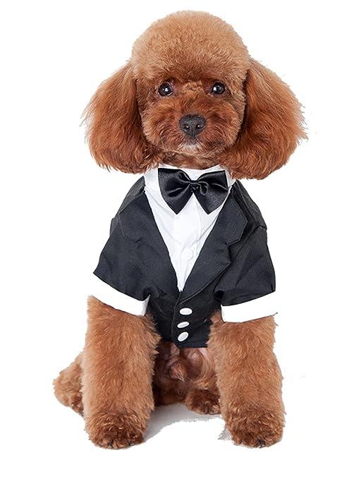 Glamour Girlz Adorable Pequeño Perro & Gatos Raza Negro & Blanco Traje de Esmoquin Vestido Up