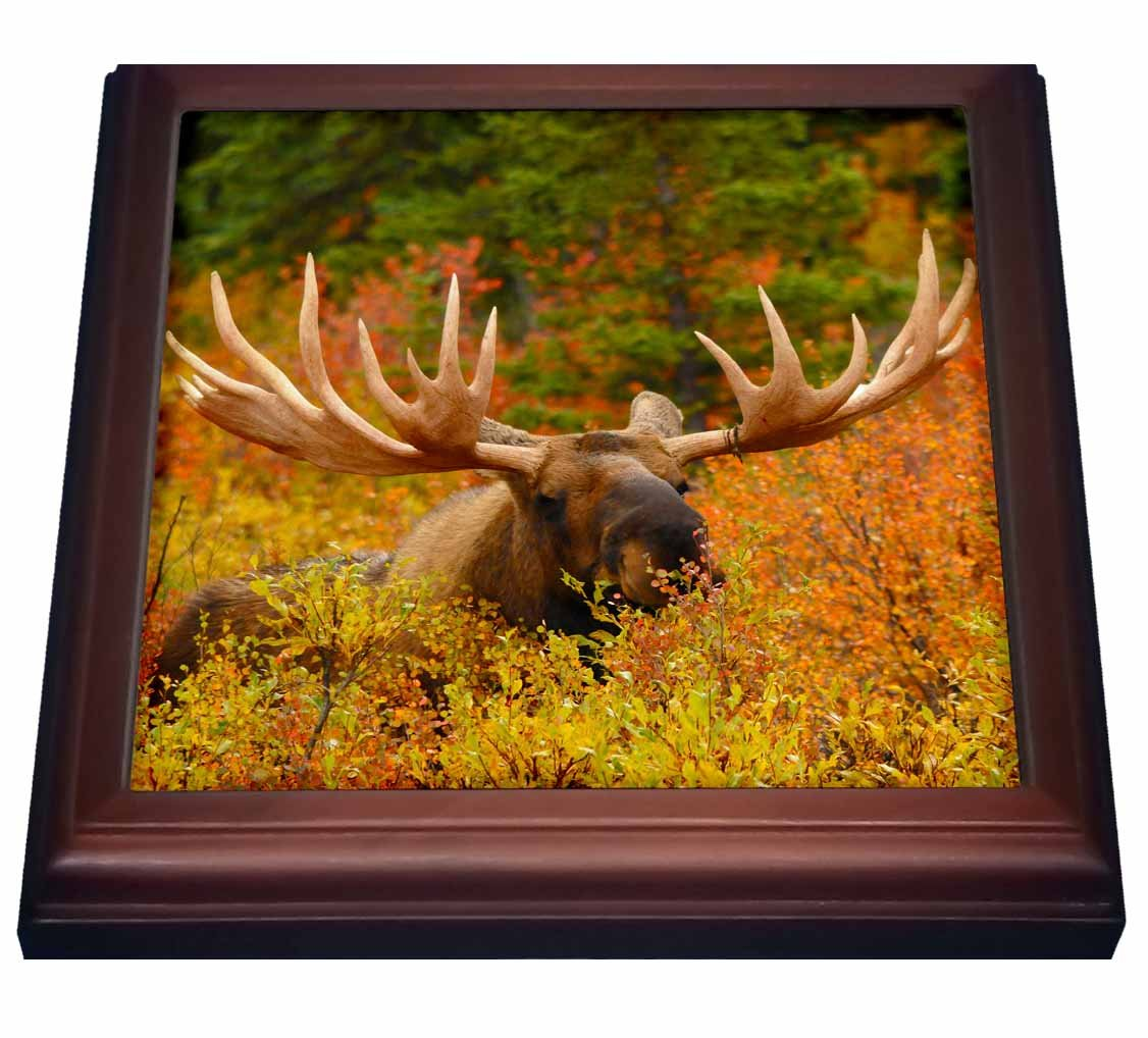 3dRose trv_142049_1 Bull Moose Wildlife, Denali Park, Alaska, USA Trivet with Tile, 8'' x 8''