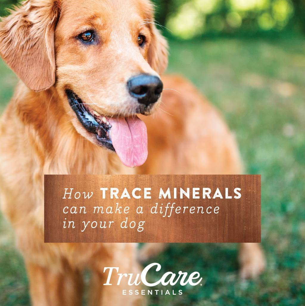 TruCare Essentials Trace Mineral Supplement Chews for Dogs, 30 Count Jar (Zinc, Biotin, Vitamin A) by TruCare (Image #8)