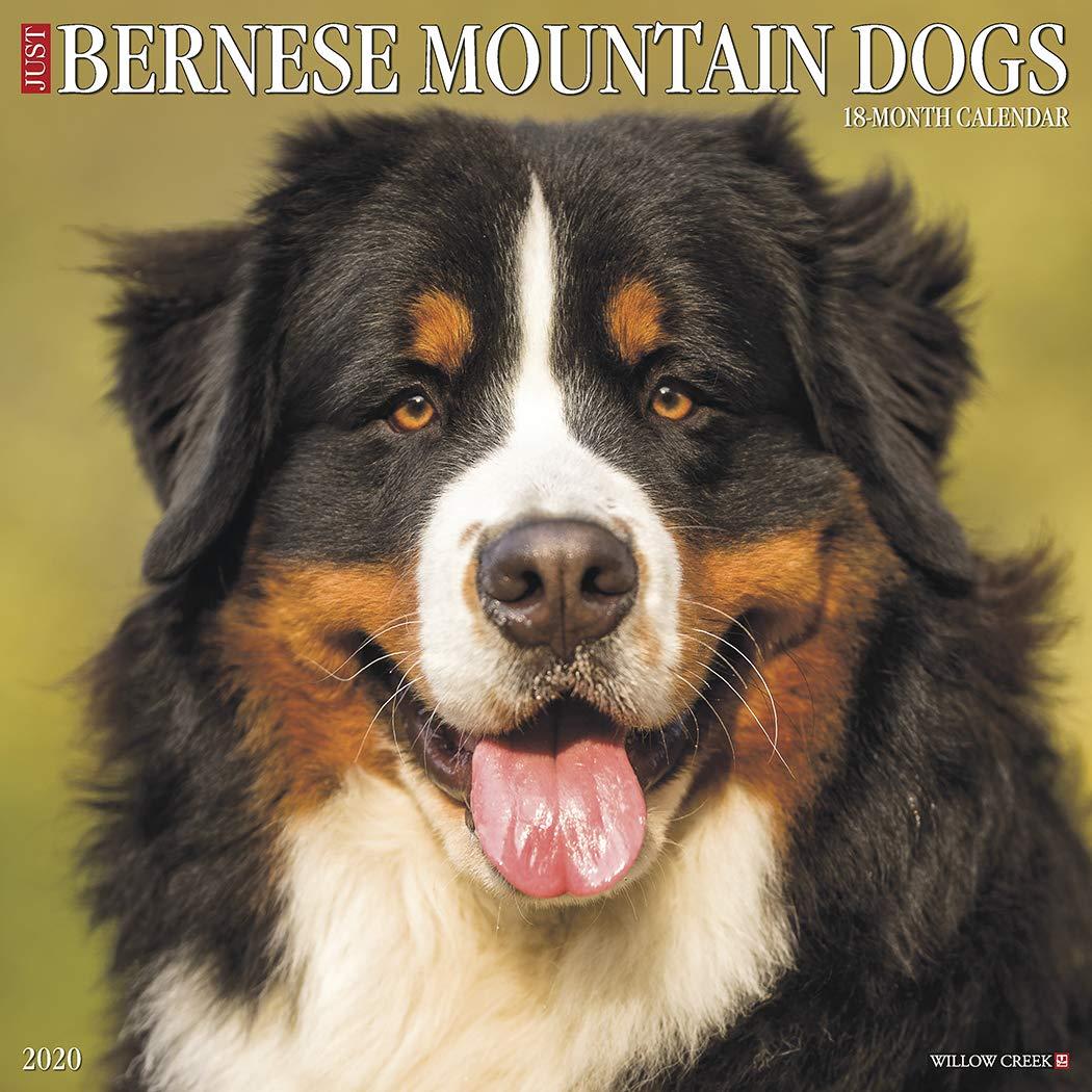 Just Bernese Mountain Dog 2020 Wall Calendar Dog Breed
