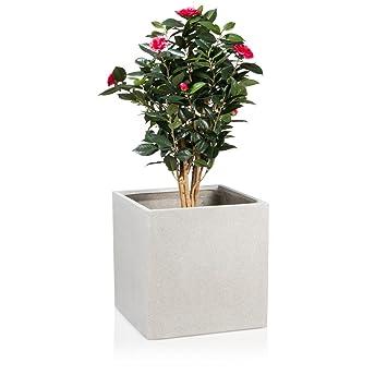 Pflanzkübel Blumenkübel CUBO 50 Fiberglas, 50x50x50 cm, grau ...