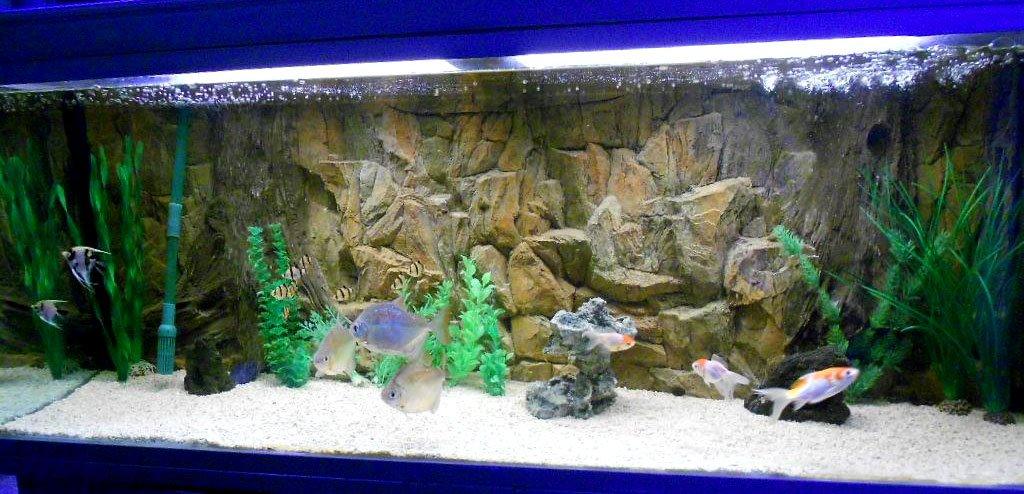 Aqua Maniac - Fondo de acuario 3D con rejilla de ventilación en dos secciones, polirresina (no espuma), 4-6 cm de grosor, decoración acuática única: ...