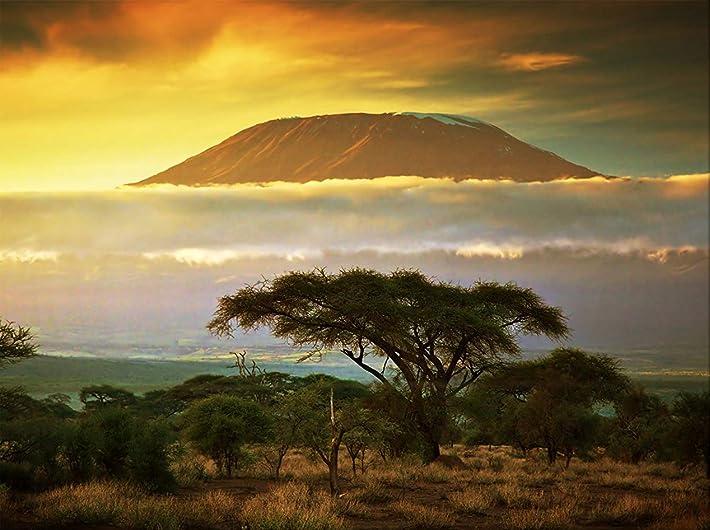 ケニアのサバンナとのキリマンジャロ(タンザニア国立公園)/キャンバス上の写真アート(90*70cm)