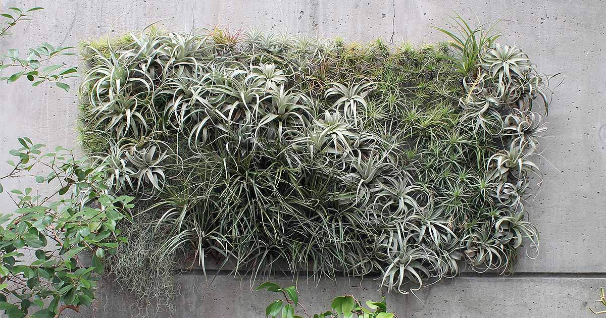 Pack of 8oz Natural Natural Color Spanish Moss Preserved Floral Moss