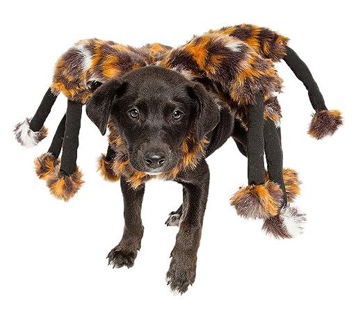 spider-pet-costume