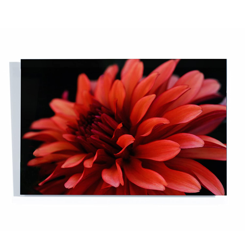 Acrylix 18 x 24-Inch Trademark Fine Art Red Dhalia by Kurt Shaffer