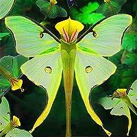 mymotto 100 pcs Phalaenopsis Orchidée Graines Bonsaï Rare Orchidée Graines De Fleurs Intérieur Jardin