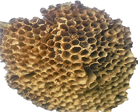 SNB Handicrafts Yellow Bee Nest for Hairfall Alopecia Treatment