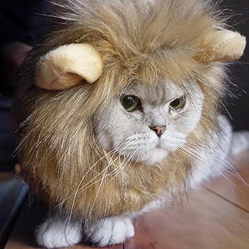 Idepet - Peluca Divertida con Orejas para Gato o Gato con león, para Disfraz pequeño