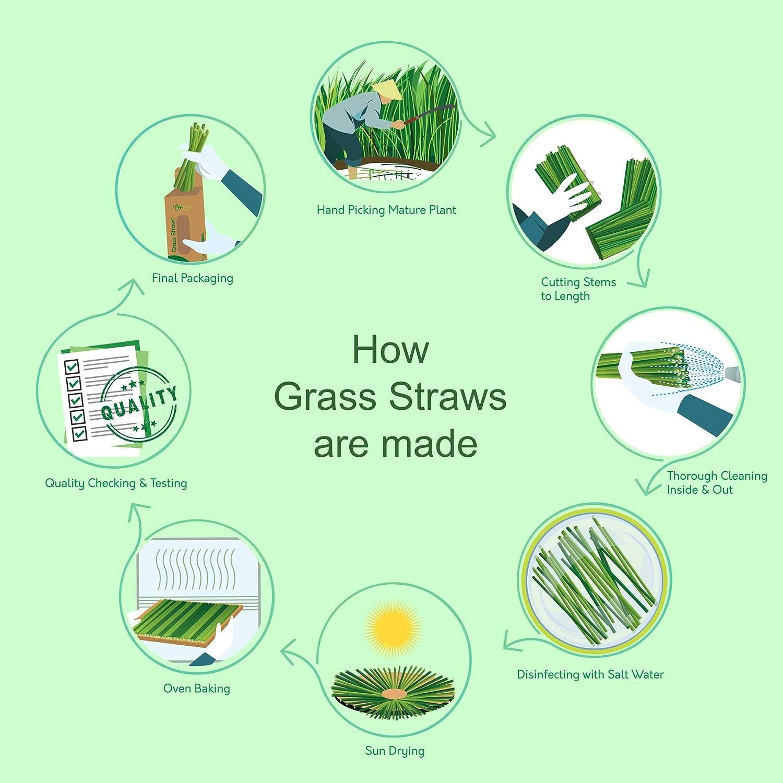 Pajitas de hierba orgánicas 100% naturales, grandes, divertidas ...