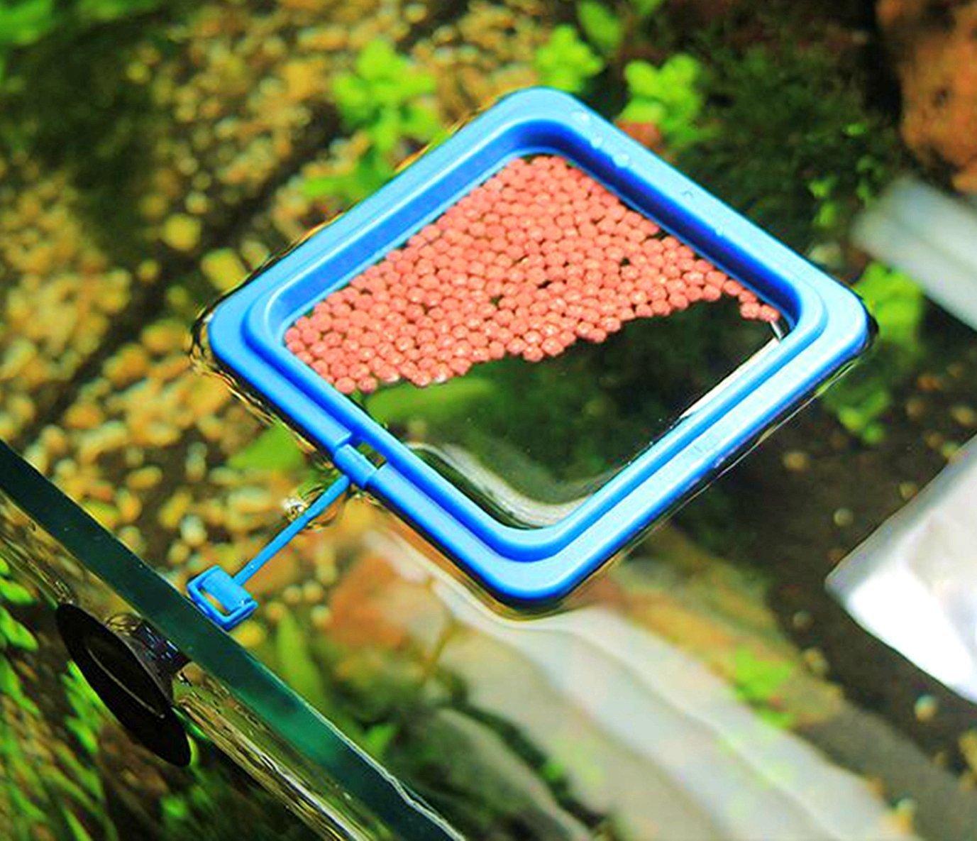 Anillo de alimentación de peces de acuario círculo flotante de alimentos, 2 juegos: Amazon.es: Productos para mascotas
