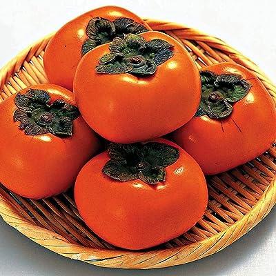 HOTUEEN Fresh Premium Quality High Germination Rate Persimmon Seeds Fruits : Garden & Outdoor