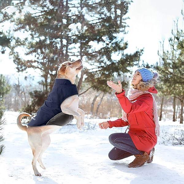 Hundemantel-Winter