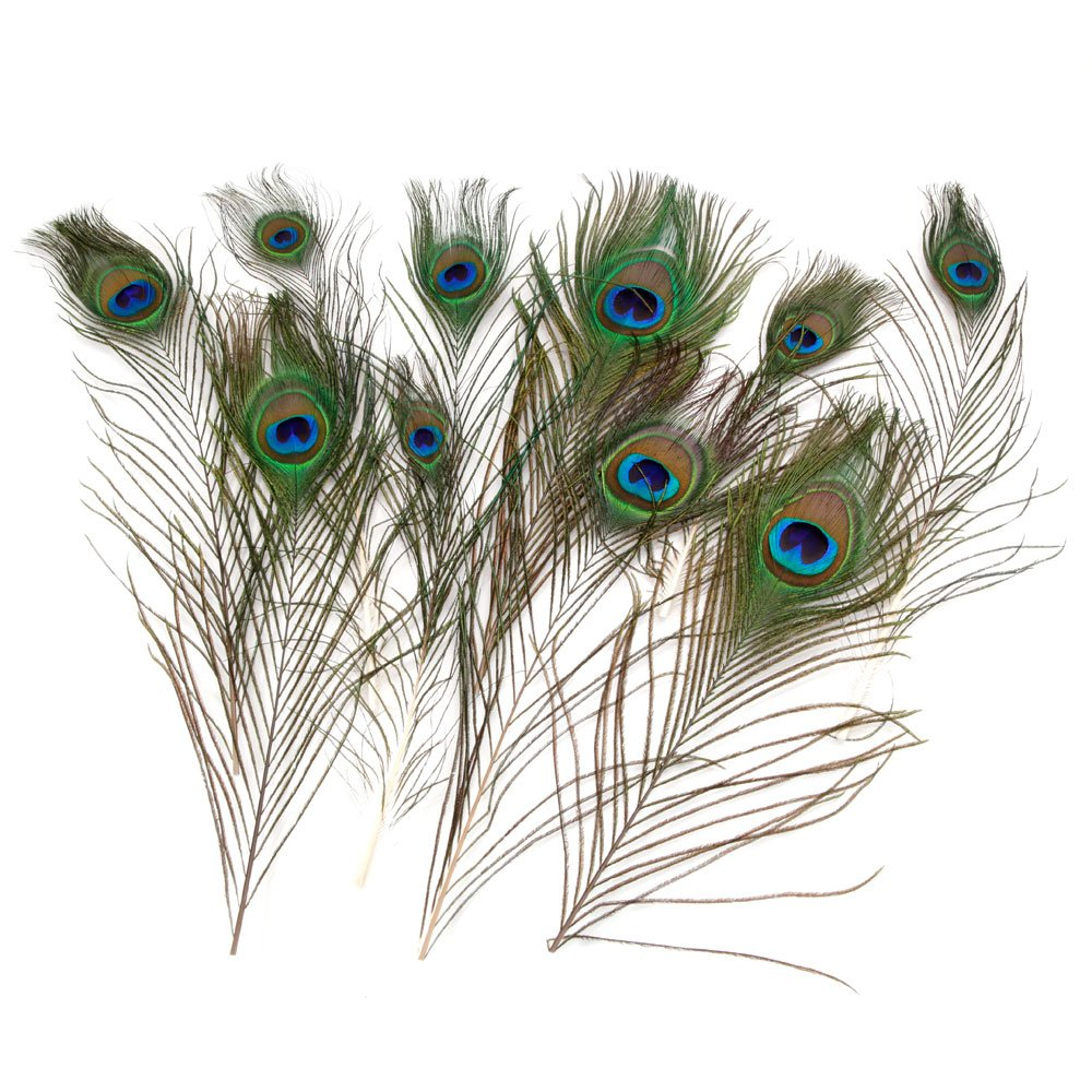 TinyCooper 10 Pieces Real Natural Peacock Feathers for Bridesmaid,Christmas .Halloween and Home Decor