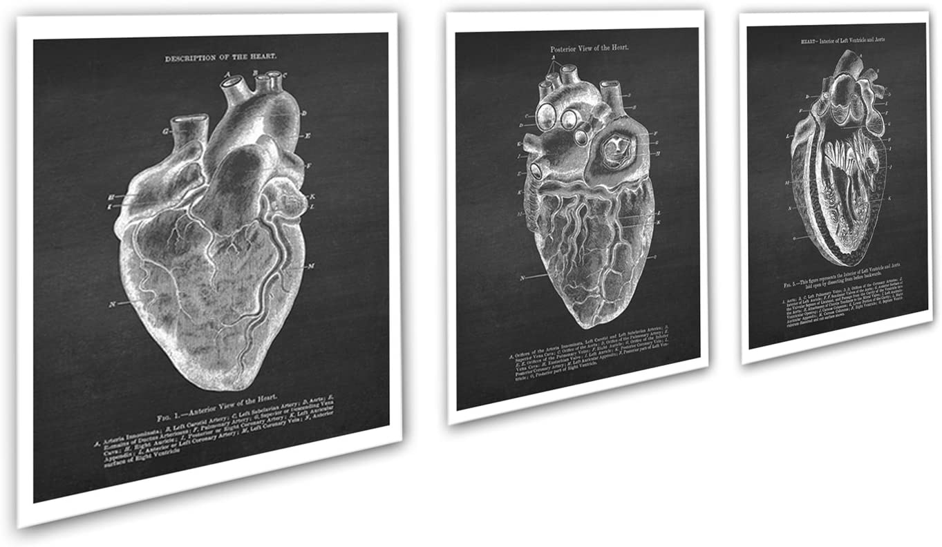 Gnosis Picture Archive Anatomy Art Set of 3 unframed Vintage Textbook Illustrations of Human Heart Anatomy_Heart_Chk3A