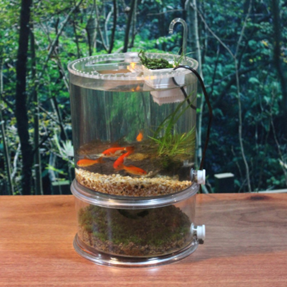 OMEM Depósito de Mesa de Oficina, Apto para Tortuga, Pescado, Reptil, Perfecto Paisaje ecológico: Amazon.es: Productos para mascotas