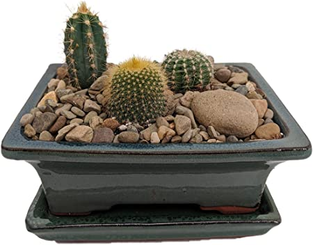Amazon.com: Arizona Cactus Jardín – Olla esmaltada – Gran ...