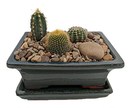 Arizona Cactus Garden   Glazed Pot   Great Gift   Easy To Grow!