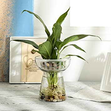 Flower Pot Klarglas grüne Hydrokultur Vase Fish Tank Wasser Bambus ...
