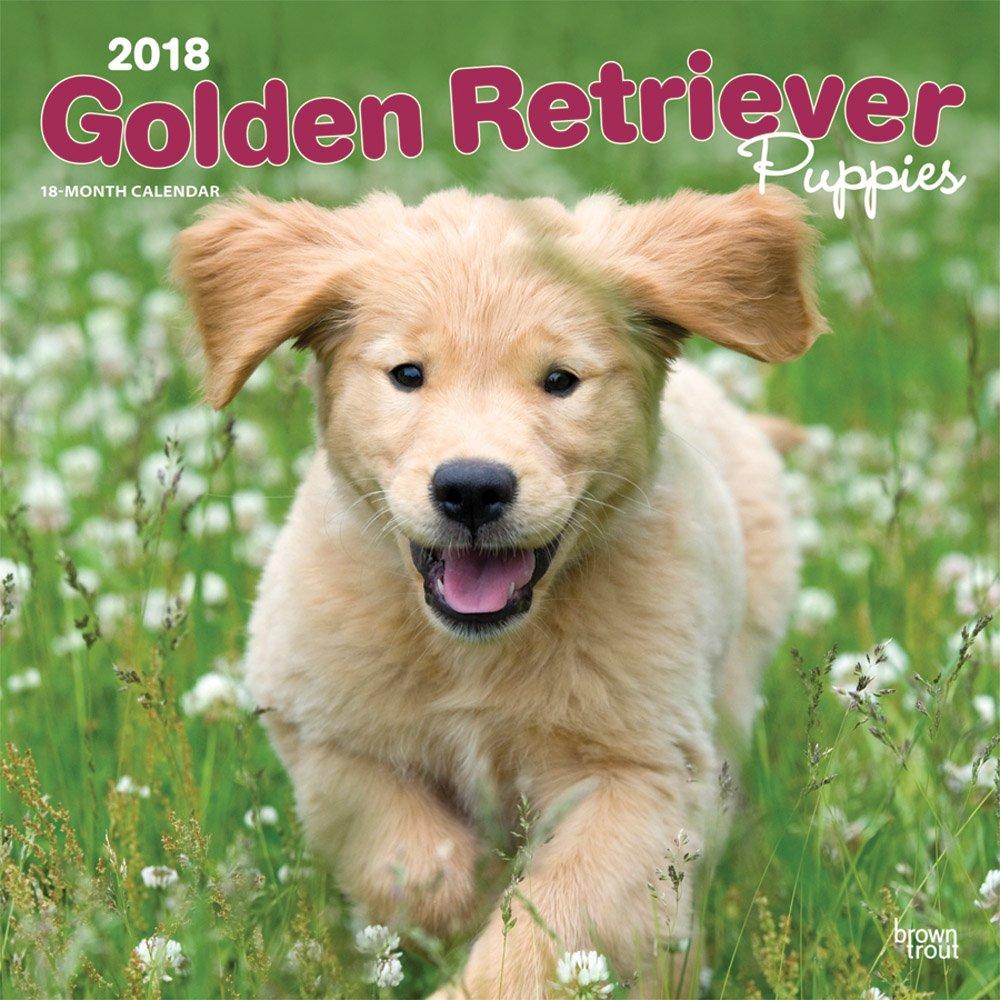 Golden Retriever Puppies - Golden Retriever-Welpen 2018 - 18-Monatskalender mit freier DogDays-App: Original BrownTrout-Kalender [Mehrsprachig] [Kalender] (Wall-Kalender)